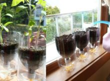 self watering seed starter pots recycled diy