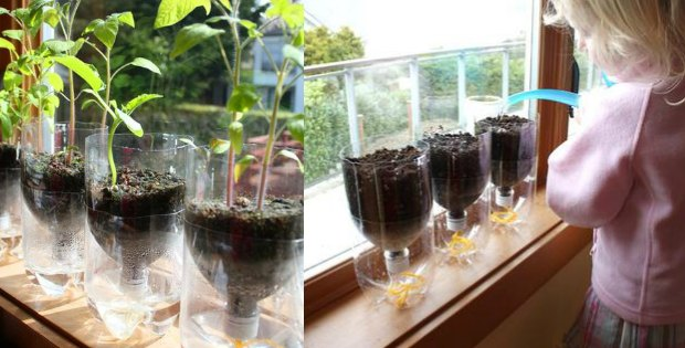 self watering seed starter pots recycled diy