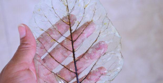 DIY Skeleton Leaves Tutorial