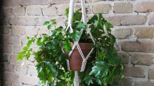 Easy Macrame Plant Hanger DIY Pattern by MerakiStudioBerlin