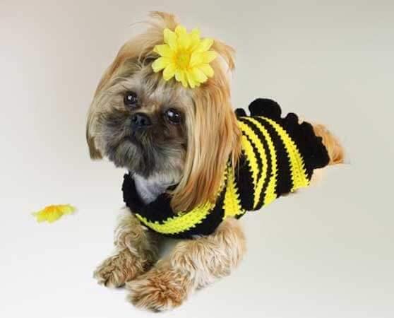 Bumble Bee Dog Sweater Crochet Pattern by Crochet Guru