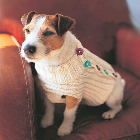 Dog Jumper Knitting Pattern by Prima