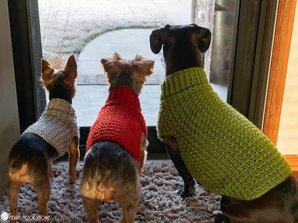 Dog Sweater Crochet Pattern by Heart Hook Home