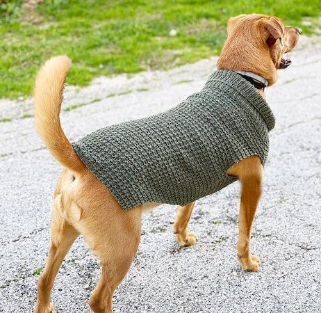Dog Sweater Knitting Pattern by Handy Little Me