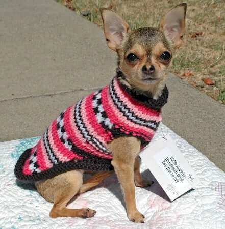 Easy Dog Sweater Knitting Pattern by Dimpleberry Hill