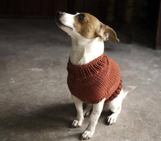 Knitted Juno Dog Sweater Pattern by Alice In Knittingland