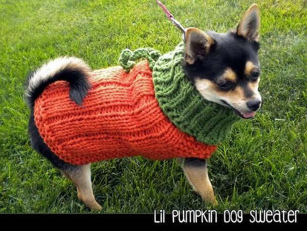 Lil Pumpkin Dog Sweater Knitting Pattern by Aunt Janet's Designs