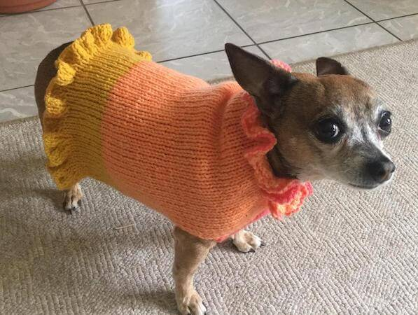 Ruffled Dog Sweater Knitting Pattern by Everyday Happy Crafts