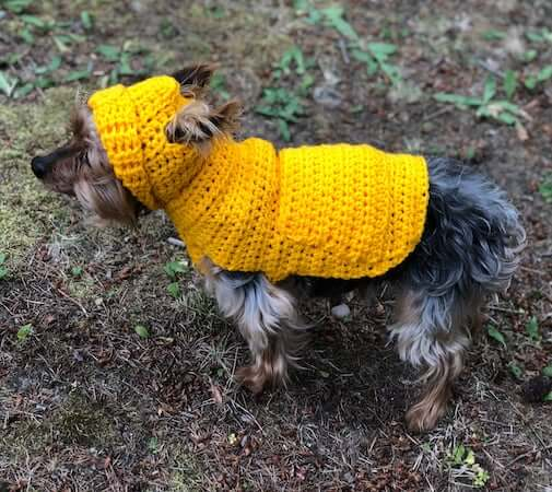 Small Dog Hoodie Sweater Crochet Pattern by Itch For Some Stitch