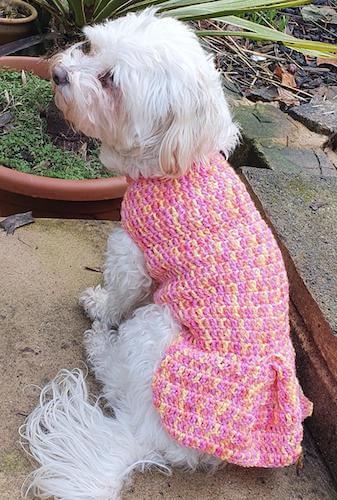 Springtime Crochet Dog Sweater Pattern by Crochet By Kirby