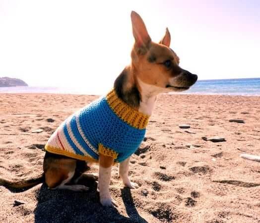Varsity Doggie Jumper Crochet Pattern by Nomad Stitches