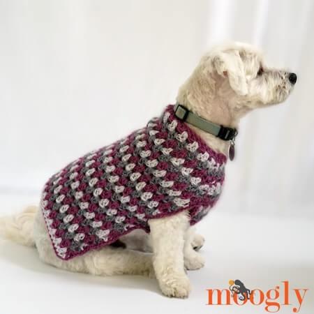 Well Dressed Dog Coat Crochet Pattern by Moogly